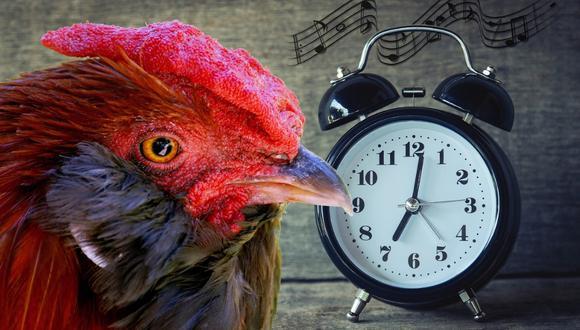 El gallo Maurice se convirtió en el centro de atención por la querella que le interpusieron. (Foto: Pixabay/Referencial)