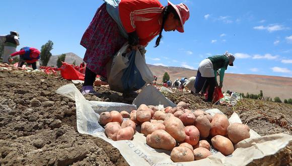Los productores deberán estar registrados en el Padrón de Productores Agrarios, indicó el Midagri. (Foto: GEC)