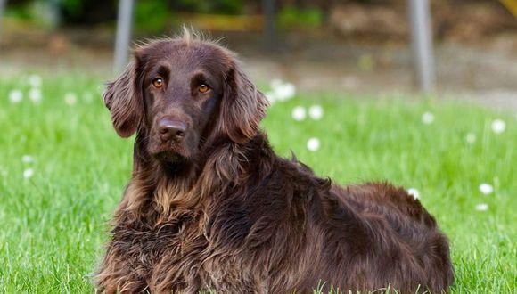 Un perro con una grave dolencia hepática fue adoptado por una familia que prometió cumplirle toda su 'lista de deseos'   Foto Pixabay / 422737
