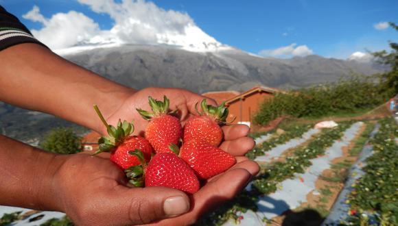 El proyecto empezó en el distrito de Mancos, con casi una veintena de cultivos. Los distritos de Shilla y de Amashca han sido los siguientes en llevar a cabo la iniciativa.