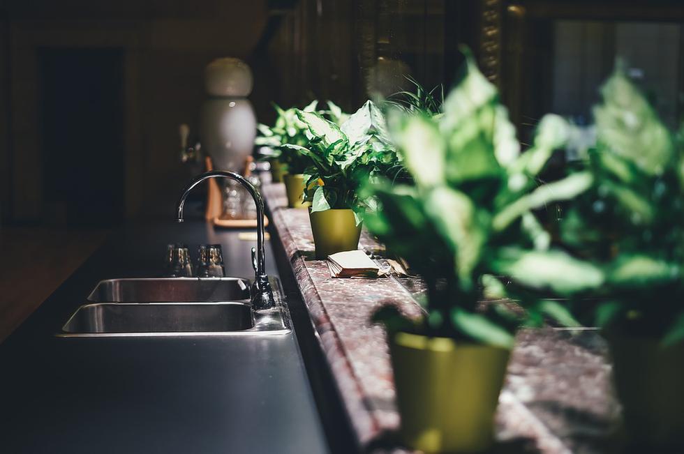 Las plantas no solo nos dan alegría, también ayudan a tener un aire más puro. (Foto: Pixabay)
