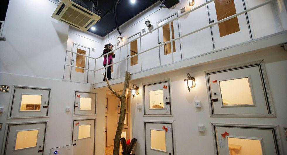 ¿Un hotel de cinco estrellas solo para gatos? Conoce el alojamiento que viene causando sensación en Malasia. (Foto: EFE)