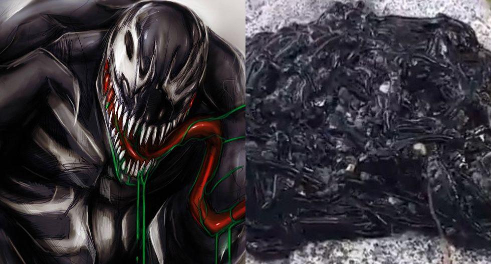 Los usuarios de las redes sociales decidieron llamar a la especie 'Venom', en honor al personaje de Marvel.