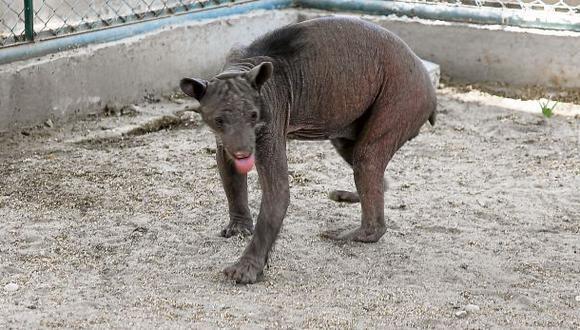 Piura no tiene recursos para cuidar animales rescatados