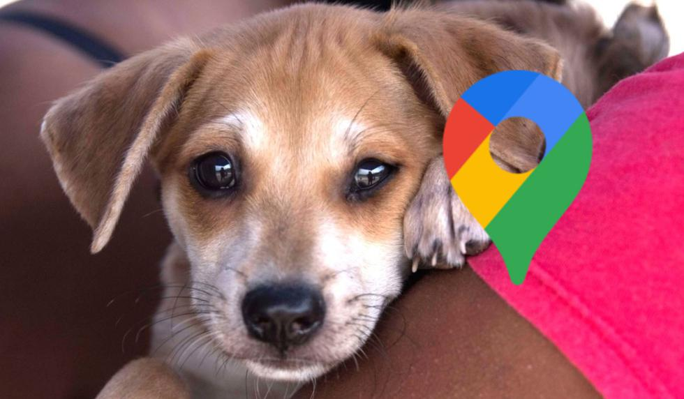 ¿Tu perrito se encuentra mal? Tranquilo. Así podrás saber si la veterinaria está abierta en tiempos de cuarentena usando Google Maps. (Foto: Andina)