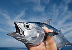 Pesca del día: Mientras el mar descansa, comemos bonito