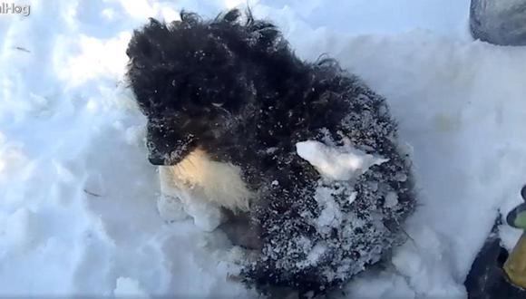 Este pequeño perrito apareció con hipotermia en el hielo y los rescatistas lo llevaron entre sus ropas para que no tenga más frío. (Foto: ViralHog)