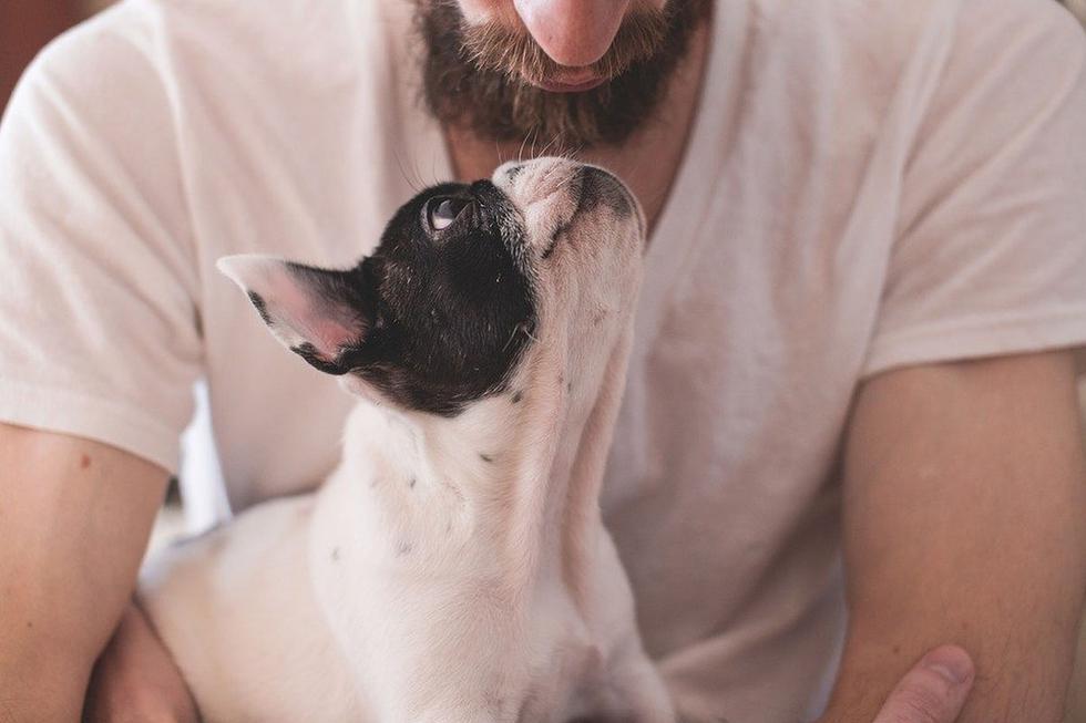 El can hacía todo lo que estaba a su alcance para convencer a su amo de que continúen las muestras de cariño. (Pixabay)