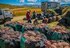 Apurímac: agricultores envían 120 toneladas de papa a mercados de Lima