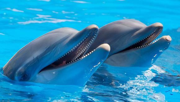 Los delfines estaban saltando junto a los jets. (Foto: Referencial - Pixabay)