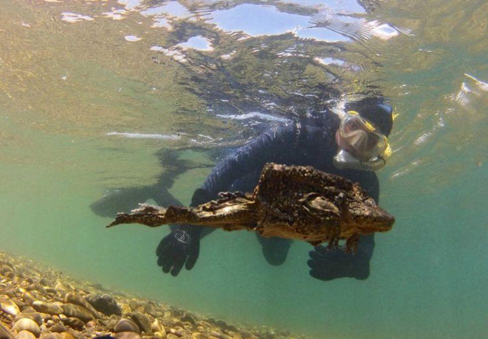 Un ejemplar nadando en las profundidades del Lago Titicaca. Foto: Arturo Muñoz.
