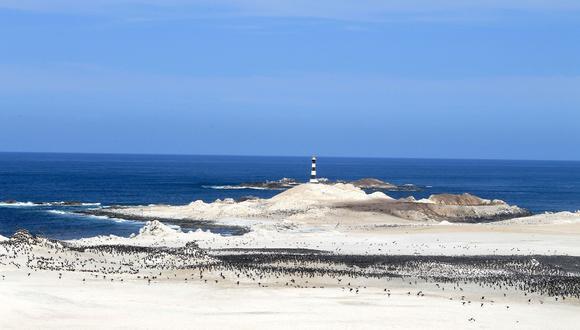 Se reinician actividades turísticas en Punta Coles, principal destino de biodiversidad marina de Moquegua.(Foto: Sernanp)