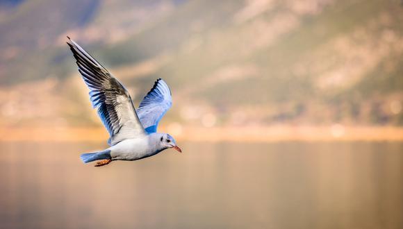 Atrapa al vuelo a una gaviota que le quería robar su comida y es criticado duramente por defensores de animales. (Foto: Referencial / Pixabay)