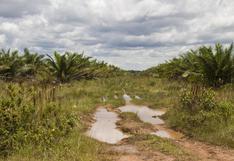 Colombia: la palma que invadió el territorio ancestral sikuani en el Vichada