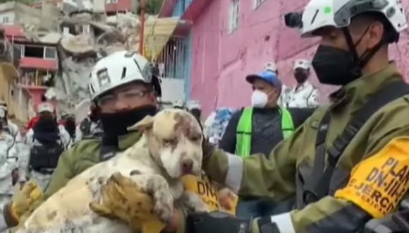 El perro sobrevivió 3 días bajo los escombros del derrumbe del cerro Chiquihuite. (Foto: Captura Televisa)