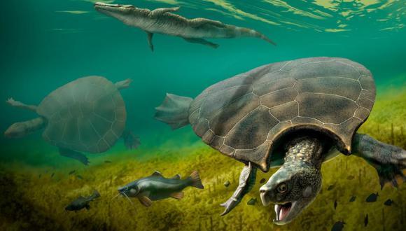 Los primeros fósiles de Stupendemys se encontraron en la década de 1970, pero muchas cuestiones relativas al animal seguían siendo un misterio. (Foto: Reuters)