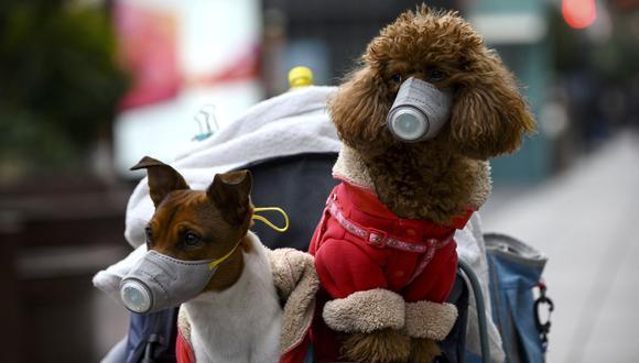 ¿Cómo hacer más fácil una cuarentena para tu perro? (Foto: FOX59)