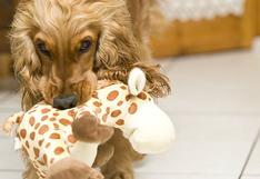 Cuatro actividades divertidas que puedes hacer con tu mascota en cuarentena