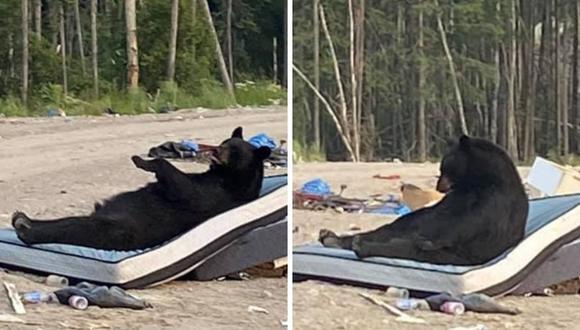 El animal se dio cuenta de que estaban observándolo. (Foto: Keira Mamakwa | Facebook)