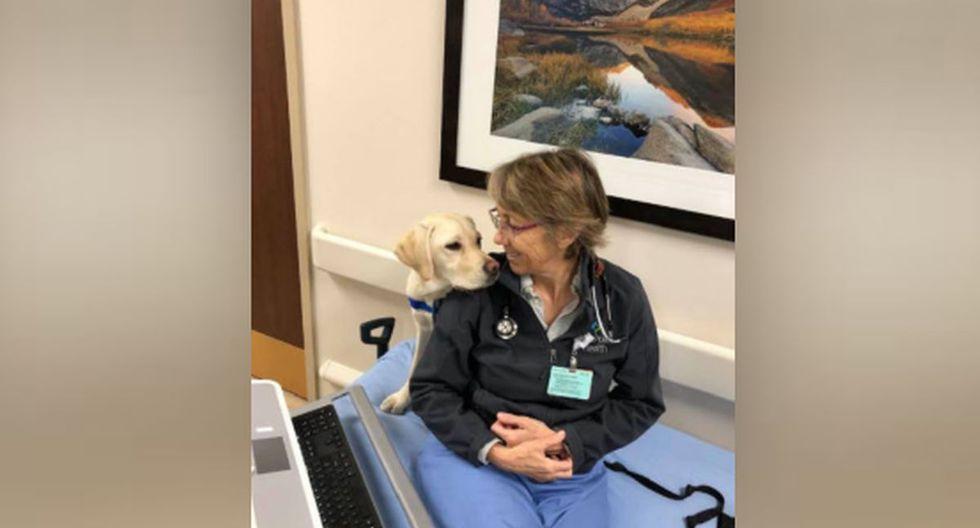 La doctora cría a Wynn hasta que la mascota esté lista para un entrenamiento más intensivo para convertirse en un animal de servicio para Canine Companions for Independence. (Facebook: Susan Ryan)