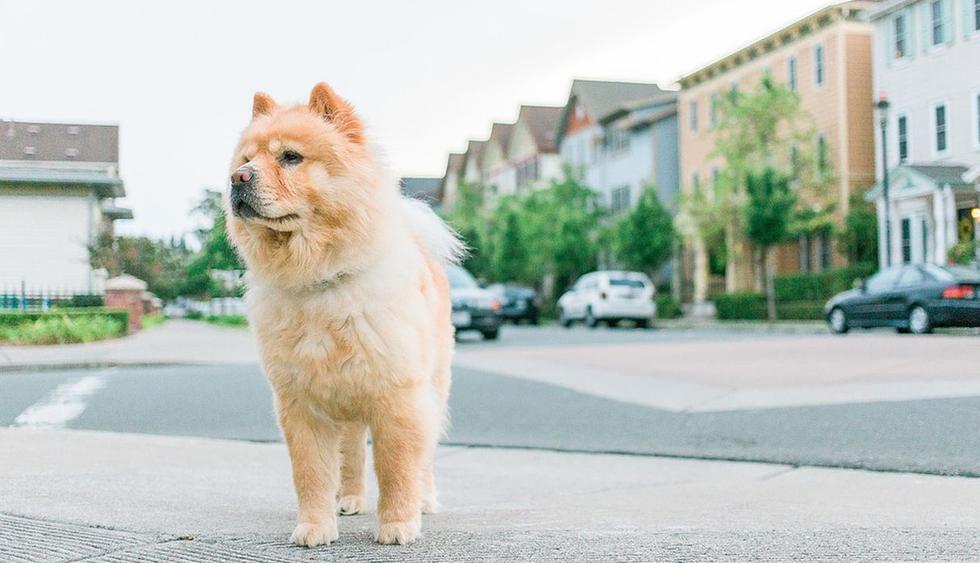 El can se mantuvo tranquilo, hecho que impresionó bastante en YouTube. (Pixabay / StockSnap)