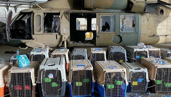 Una ONG denunció que Estados Unidos abandonó a sus perros en Afganistán. (Foto: Twitter)