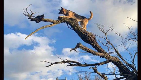 Perro y gato quedan atrapados en la cima de un árbol hasta que unos bomberos llegan para el rescate. (Foto: Facebook)