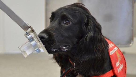 Perros pueden detectar cáncer de próstata en orina humana