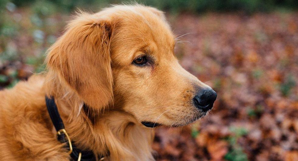 """Más de uno afirmó que el animal había sido un """"verdadero héroe"""". (Foto: Referencial - Pixabay)"""