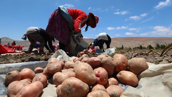 Qali Warma realizará compras de papas nativas a los productores peruanos. (Foto: GEC/Alessandro Currarino)