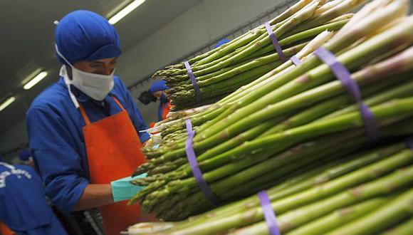 La exportación peruana de espárragos se contraería 5% el 2014