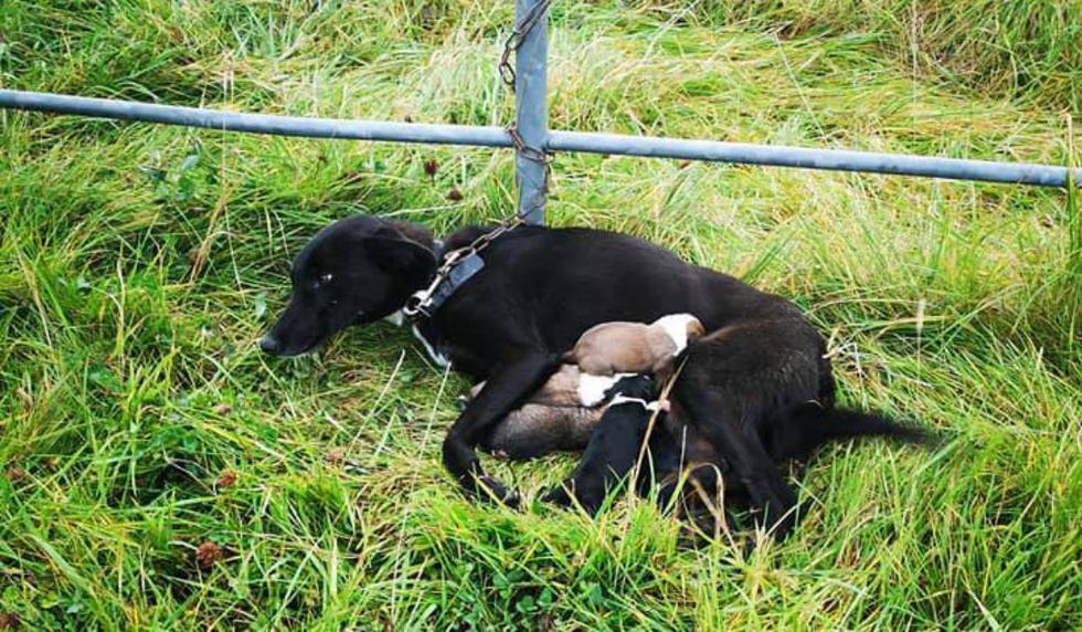 Es viral en Facebook. Todos los canes se encuentran en buen estado de salud. (Foto: Facebook/Ispca)