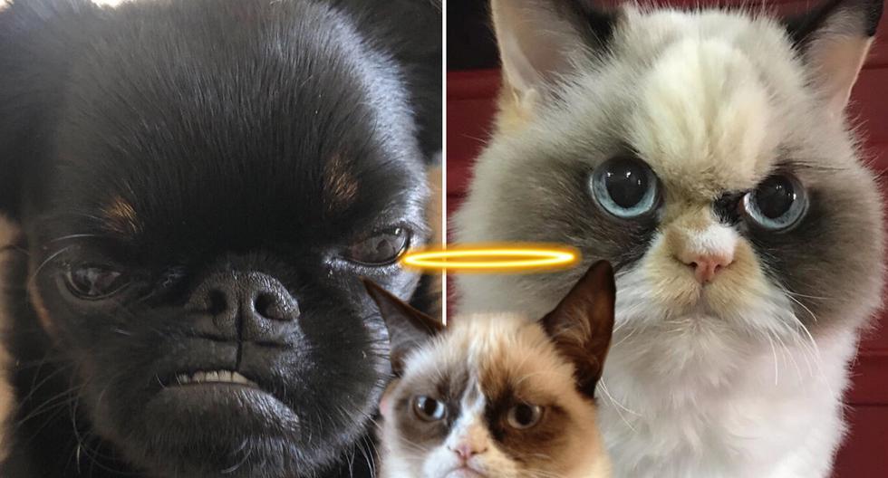 'Chico' y 'Meow Meow' buscan conquistar el trono abdicado por 'Grumpy Cat', que murió en mayo del 2019 a la edad de 7 años por una infección en el tracto urinario. (Foto: the_cat_named_meowmeow/hazelandthegang en Instagram)