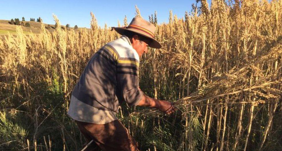 La extensión de las tierras de Rodrigo Cisneros ha crecido desde que comenzó a vender quinua.