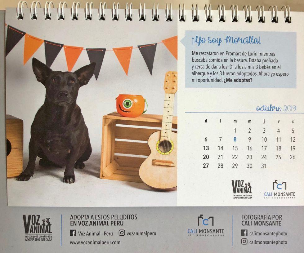 Morita es Miss Octubre en el calendario del albergue Voz Animal, el que vende como forma de recaudar fondos para el cuidado de los perros que cuida.