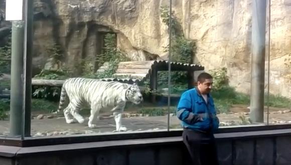 Tigre blanco le pega un terrible susto a un sujeto que se encontraba de visita en el zoológico. (Foto: Captura YouTube)
