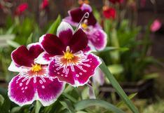 Conoce los cuidados para que tus orquídeas vivan por mucho tiempo | FOTOS