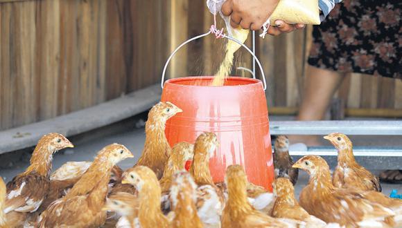 Las aves aguardan la reposición de semillas en su recipiente.