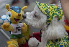 En Río de Janeiro los perros también celebran el carnaval