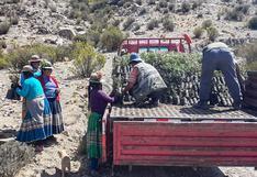 Moquegua: plantean reforestación con plantones que retienen hasta 20 litros de agua al día