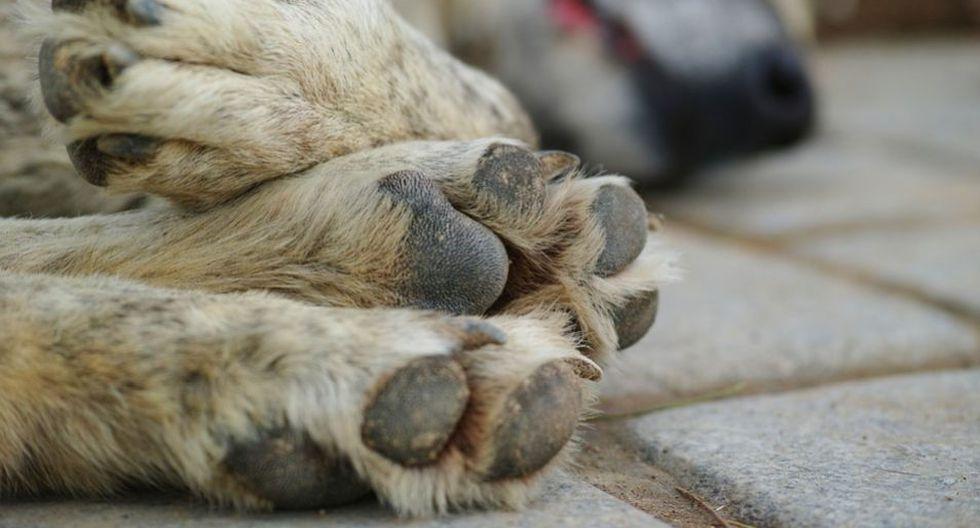 La muerte de una mascota es muy dolorosa para muchas personas. (Foto: Pixabay)