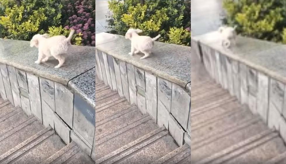 En Facebook se hizo viral el video de un perro cachorro que aprendió a jugar tirándose por un muro en México. Así reaccionaron los usuarios de las redes sociales. (Foto: Captura)