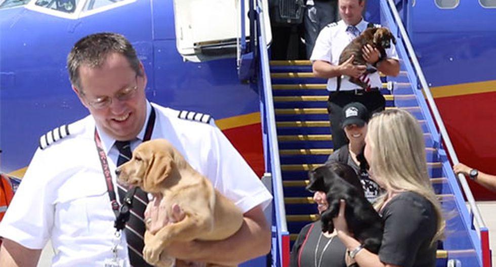 Los animales rescatados fueron llevados a California, donde ya se les busca familias adoptivas. (Facebook Southwest Airlines)
