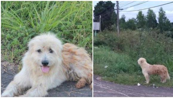 El amor y fidelidad de las mascotas con sus amos no tiene comparación. Este can en Tailandia protagoniza un relato cargado de emociones y sorpresas. (Foto: Telefe)