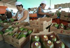 Mango superaría este año récord de US$ 260 millones en exportación, según ComexPerú