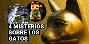 De deidades a animales domésticos: conoce cuatro misterios sobre los gatos
