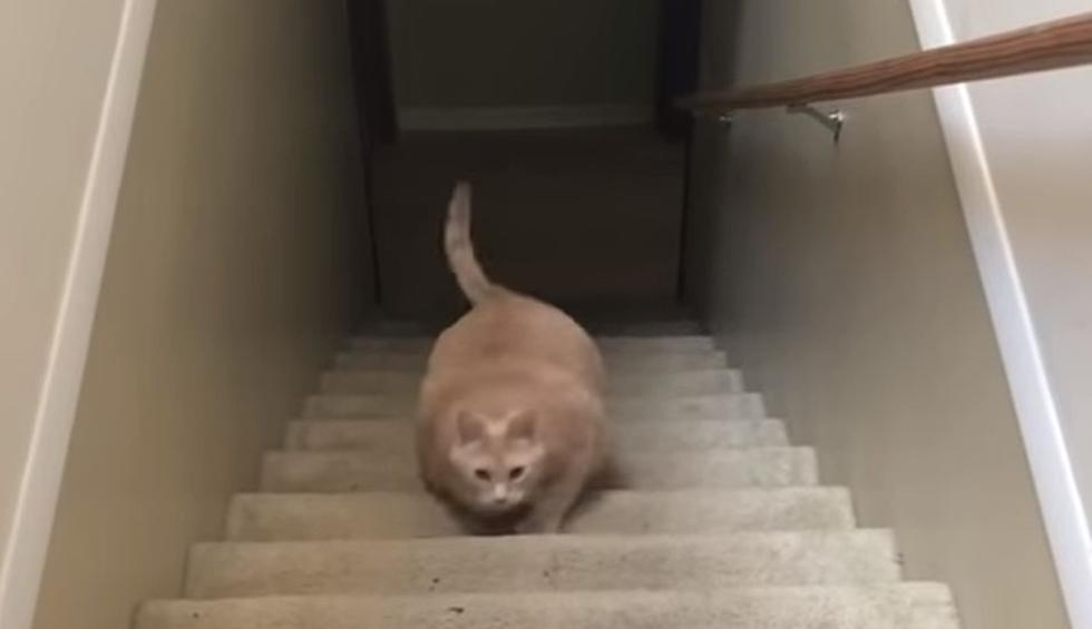 Cibernautas aplaudieron lo que hizo el gato. (YouTube: ViralHog)