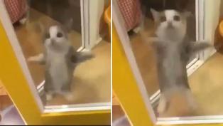Gatito cusa furor en redes sociales al bailar el Aserejé