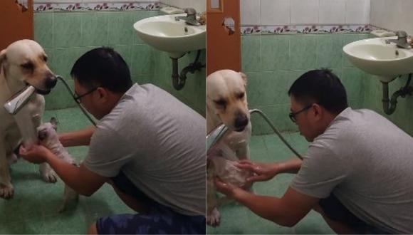 El hombre se apoyó en su mascota para bañar a otra. Las imágenes fueron publicadas en Facebook y no tardaron en hacerse virales. (Foto: captura de video)