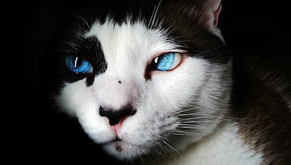 El felino se dio cuenta de lo que ocurrió y se fue rápidamente a investigar. (Foto: Pixabay/ Referencial)